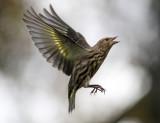 Aggressive Flight
