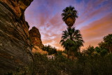 Vibrations of the Desert