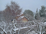 Winter from the window...