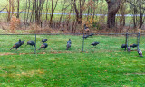 Birds in my Yard