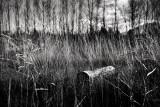 landscapes_bw