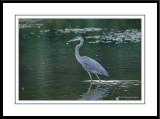 Jacob's Landing Riverside Park & Lakeside Park