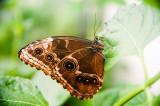 15th June 2017  butterfly