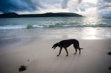 7th July 2017  tired hound