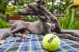 12th August 2017  dog days