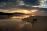 9th June 2018  hound on the beach