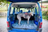 14th September 2018  hound transport