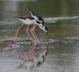 Large Birds & Shore Birds