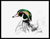 duck12c.jpg