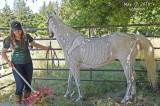 portola_valley_2018_horse_fair