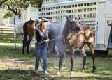 Horse Wash!
