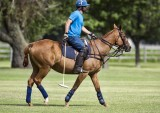 Polo Practice (GALLERY)