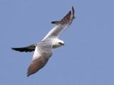 1711 Bird.jpg