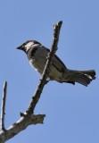 1854 Bird.jpg