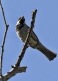 1857 Bird.jpg