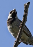 1858 Bird.jpg