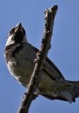 1868 Bird.jpg