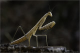 Insectes et autres / Bugs
