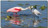 Roseate Spoonbill and Snowy Egret
