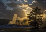 170711-9_OldFaithful_tree_sunset_5553m.jpg