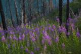 170715-6_fireweed_lake_6832m.jpg