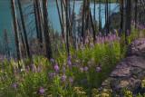170715-6_fireweed_lake_6828m.jpg