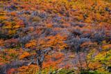 17410-4_foliage_0736m.jpg