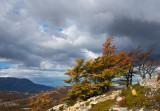170410-4_trees_clouds_0721m.jpg