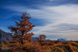 170412-2_tree_mountain_1405m.jpg