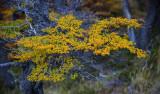 170418-4_lakeside_foliage_3089s.jpg