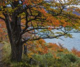 170418-4_lakeside_foliage_3053s.jpg