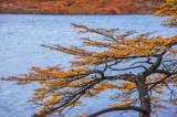 170418-4_lakeside_foliage_2997s.jpg