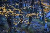 170418-4_lakeside_foliage_2998s.jpg