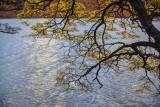 170418-4_lakeside_foliage_3010s.jpg