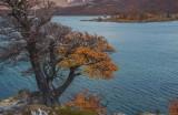 170419-4_foliage_tree_lake_3240s.jpg