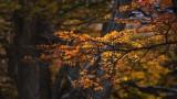 170419-4_foliage_redbacklight_3270s.jpg