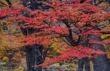 170419-4_foliage_red_woods_3215s.jpg