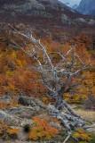 170419-4_foliage_deadtree_3370s.jpg