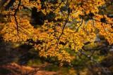 170419-4_foliage_orrange_backlight_3281s.jpg