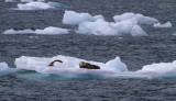 Valdez Day Cruise