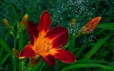 Dans le silence des fleurs