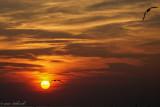sunset cedar beach 8 9 17.jpg