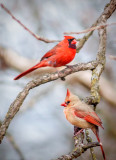 A Mating Pair