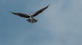 Osprey Staging