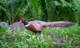 Morning Wildlife