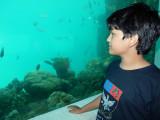 At the underwater restaurant