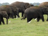 Kaundulla elephants