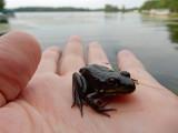 Frog, Wisconsin