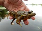 Bullfrog, Wisconsin
