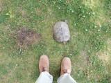 Turtle (2017)